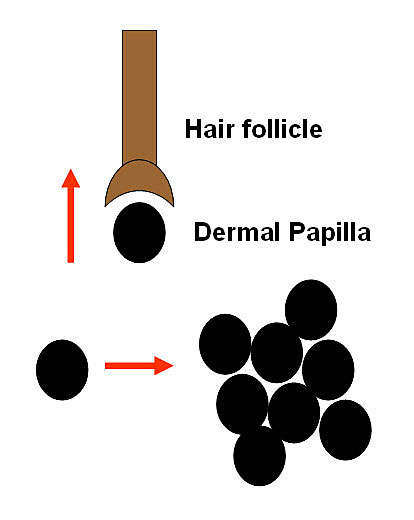 Hair Cloning Methods